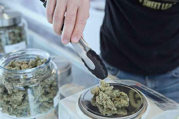expertos denuncian opacidad y burbuja especulativa en las licencias para cultivar cannabis en espana